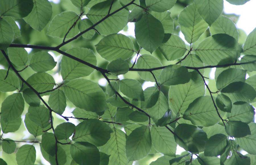 ควรปลูกต้นไม้เพื่อช่วยบังแดดข้างบ้านหรือเหนือหลังคา