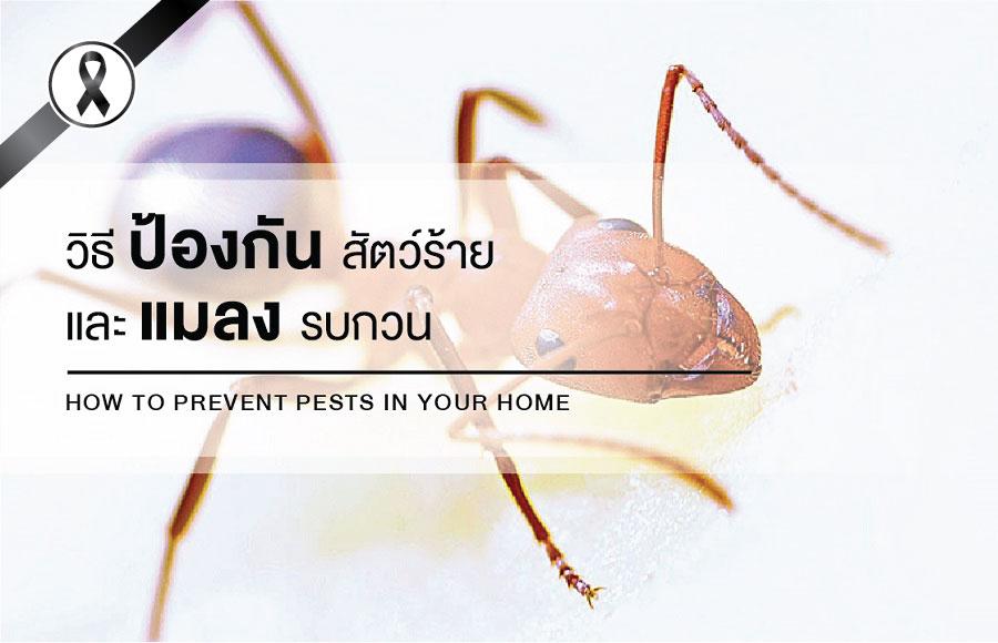 วิธีป้องกันสัตว์ร้ายและแมลงรบกวน