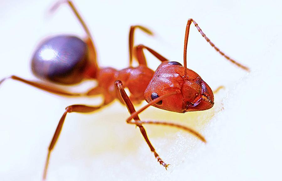 วิธีป้องกันสัตว์ร้ายและแมลงรบกวน - มด