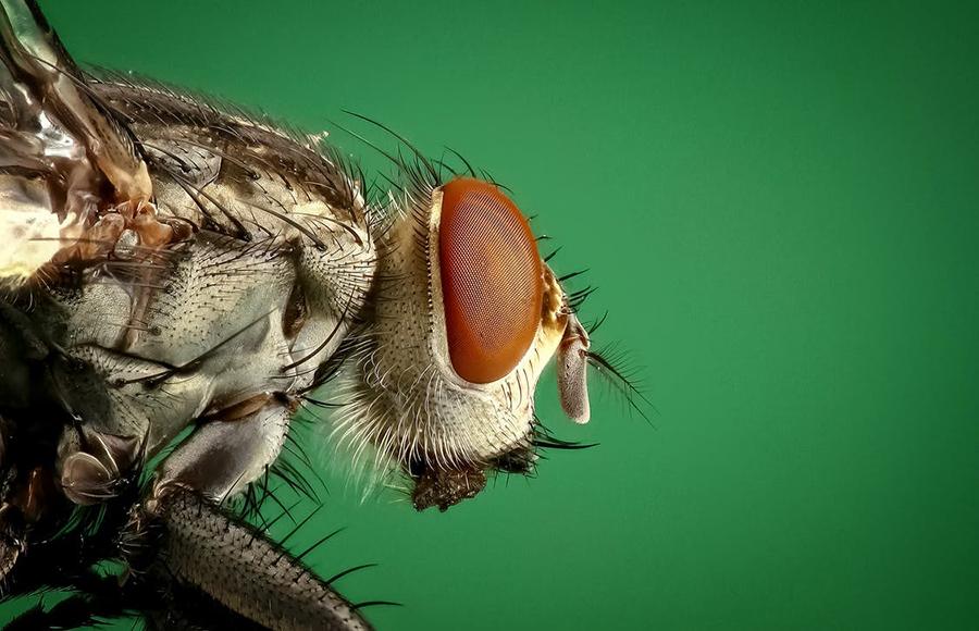 วิธีป้องกันสัตว์ร้ายและแมลงรบกวน - แมลงสาบ แมลงวัน