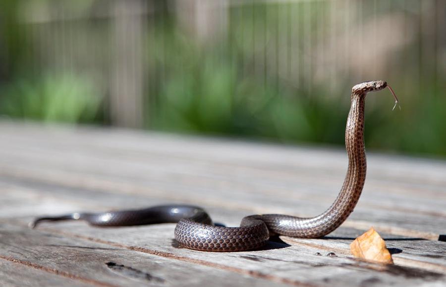 วิธีป้องกันสัตว์ร้ายและแมลงรบกวน - งู