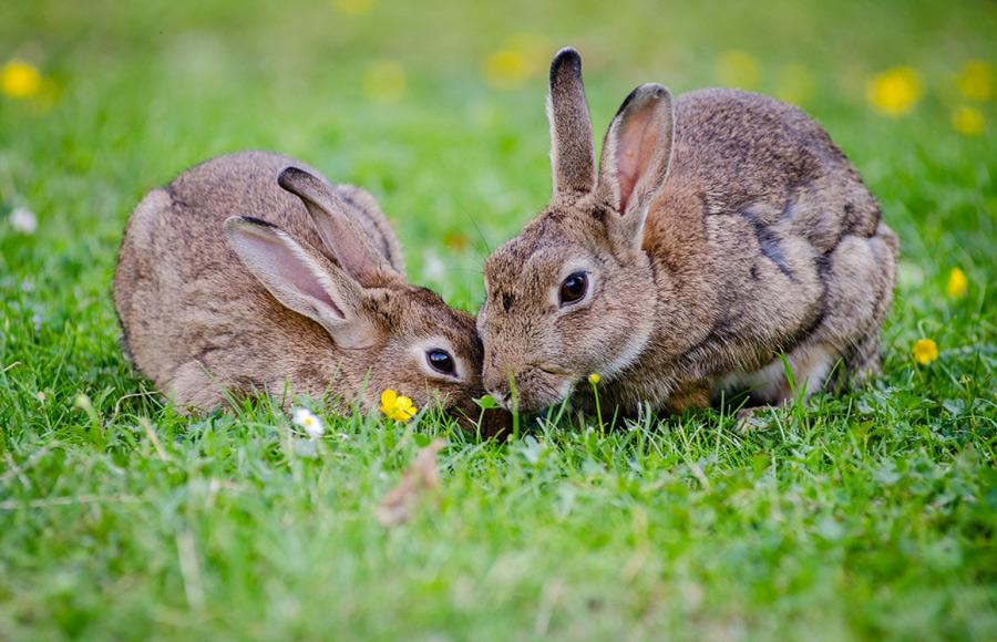 สัตว์เลี้ยงตัวจิ๋วกับความสุขไซส์จัมโบ้ - กระต่าย