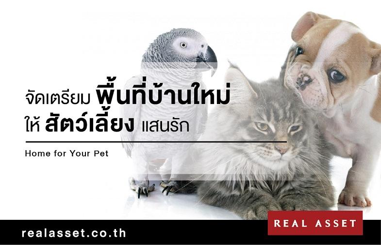 การเลี้ยงสัตว์