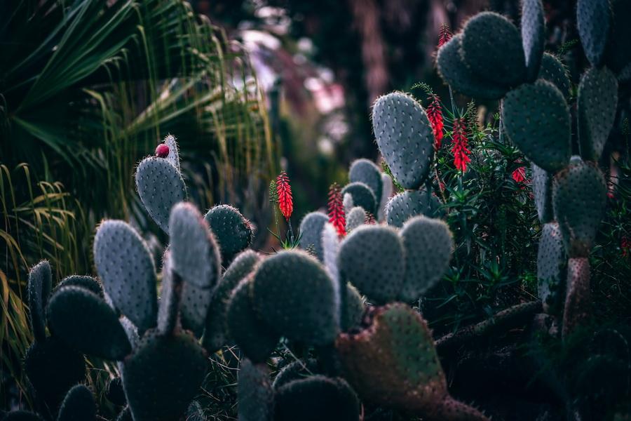 เลือกสวนให้เหมาะกับไลฟ์สไตล์ - สวนตะบองเพชรและไม้อวบน้ำ