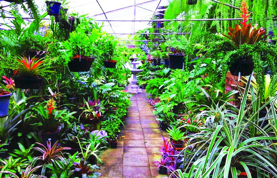 10 คาเฟ่ในสวนสุดฮิปกลางกรุง ที่คนรักธรรมชาติต้องแวะไปเช็คอิน
