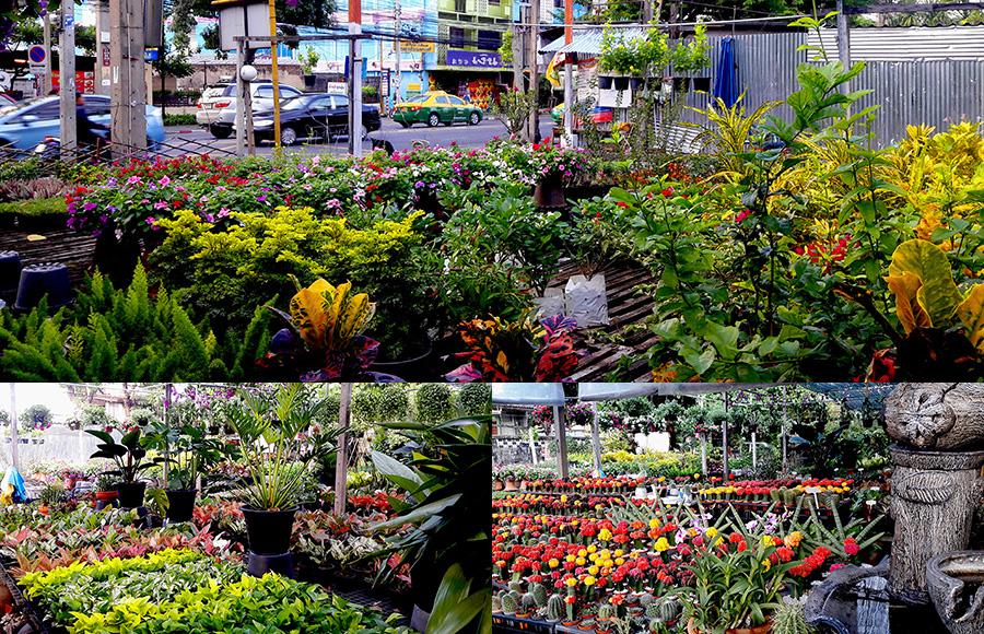 ตลาดต้นไม้ใกล้บ้านสำหรับคนรักสวน